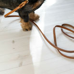 Uljas puppy leash, cognac